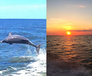 St. George Island Sunset and Dolphin Trips